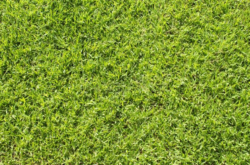 Fond naturel de photo d'herbe Fond de terrain de football d'herbe verte image libre de droits