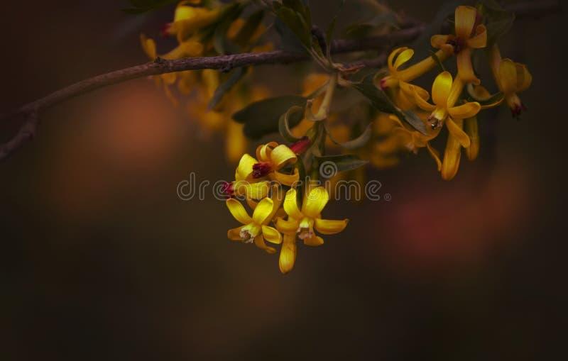Fond naturel de ressort, petites fleurs jaunes, image brouillée, profondeur de champ images libres de droits