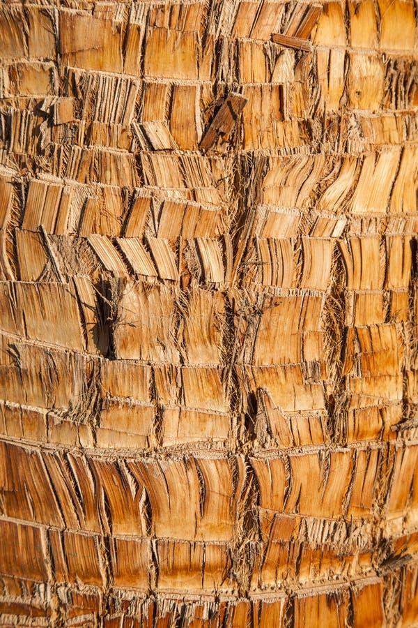 Fond naturel de texture d'écorce en bois brune rugueuse de palmier. image libre de droits