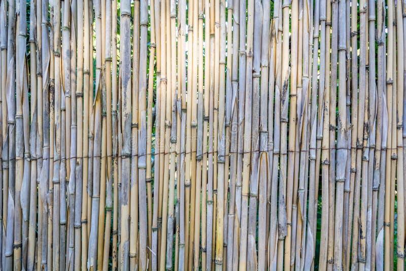 Fond naturel en bambou coloré de texture de barrière de mur photo stock