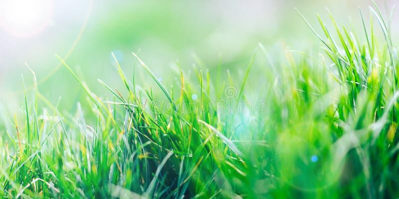 Fond naturel frais de r?sum? d'herbe verte et de bokeh brouill? par beaut? Fin de foyer s?lectif pour abstrait brouill? photo stock