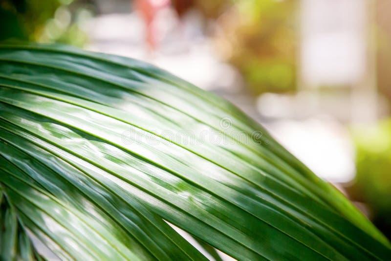 Fond naturel tropical Feuilles, palmiers et lumi?re du soleil verts photos libres de droits