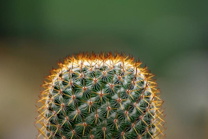 Fond noir brouillé par cactus photos libres de droits