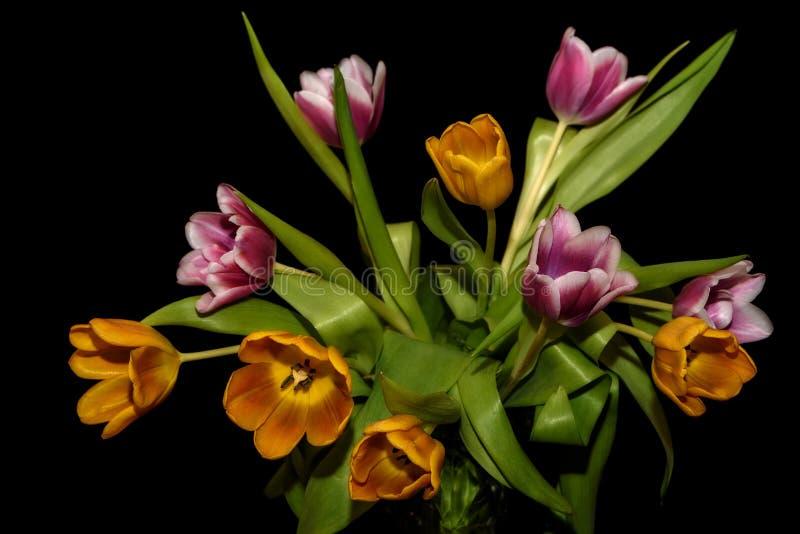Fond noir magenta orange de bouquet de tulipes photographie stock libre de droits
