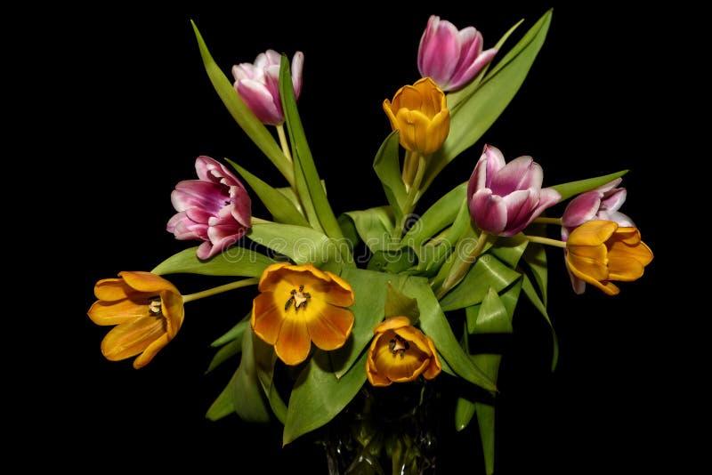Fond noir magenta orange de bouquet de tulipes image stock