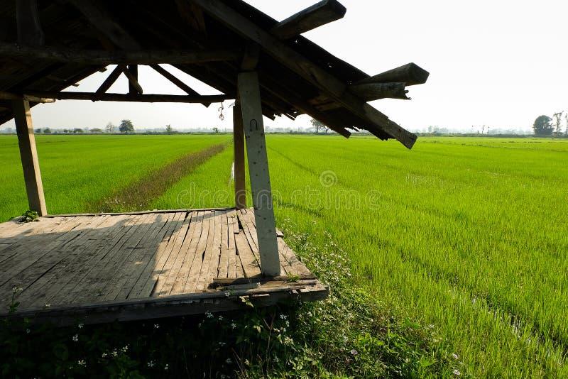 Fond nuageux d'horizontal de nuage de ciel bleu d'herbe verte de gisement de riz images libres de droits