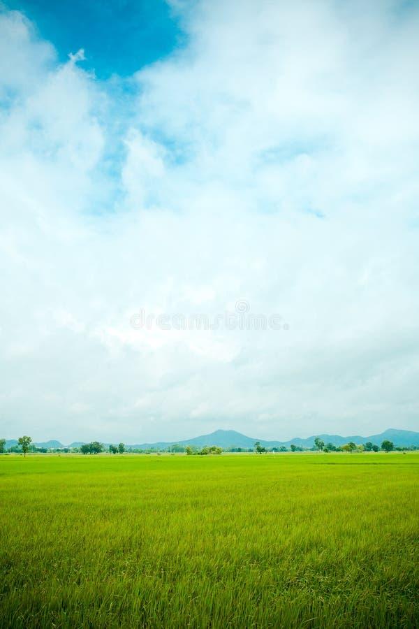 Fond nuageux d'horizontal de nuage de ciel bleu d'herbe verte de gisement de riz image stock