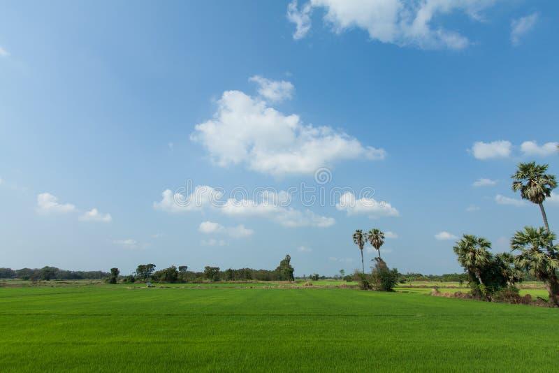 Fond nuageux d'horizontal de nuage de ciel bleu d'herbe verte de gisement de riz image libre de droits