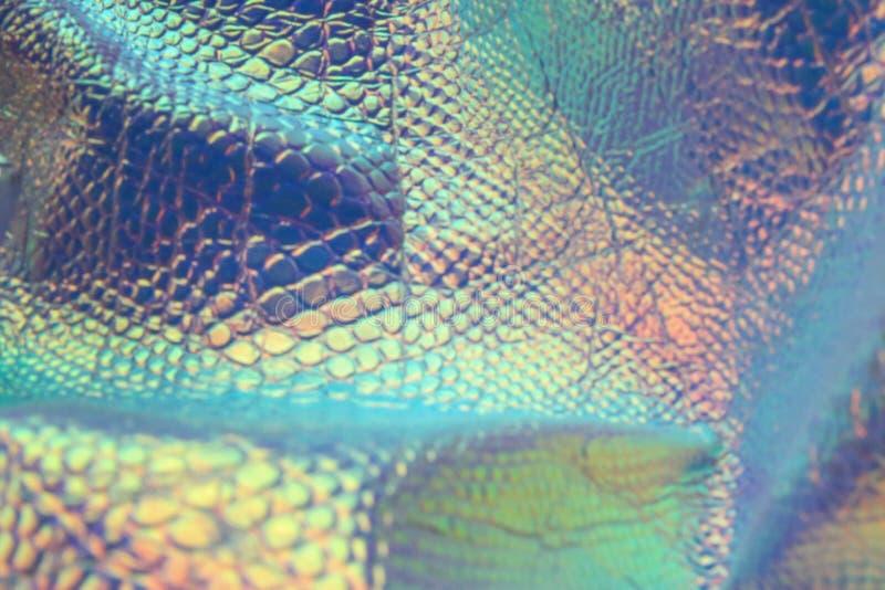 Fond olographe à la mode de serpent de résumé avec les couleurs au néon photographie stock libre de droits