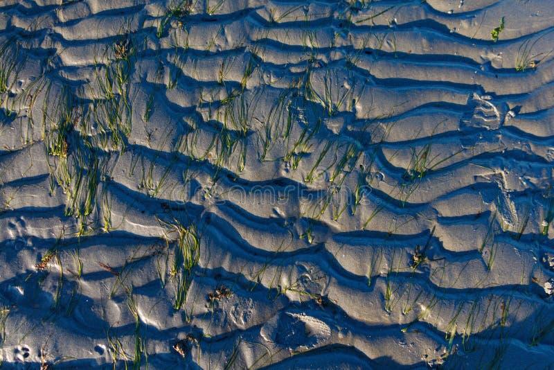 Fond onduleux abstrait de sable et d'algue dans Sun photographie stock libre de droits