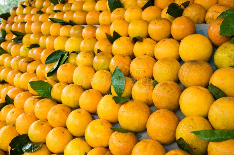 Fond orange de fruit de backgroundFresh orange frais de fruit Nourriture tropicale asiatique Nourriture tropicale asiatique photos libres de droits
