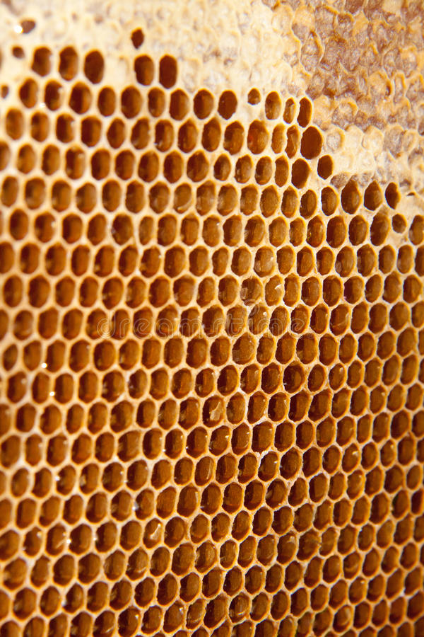 Fond ou texture de peigne de miel images stock