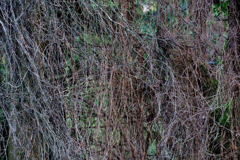 Fond peu commun des branches minces étroitement  photo stock