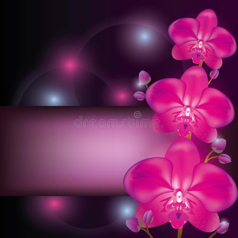 Fond pourpré d'orchidée illustration stock