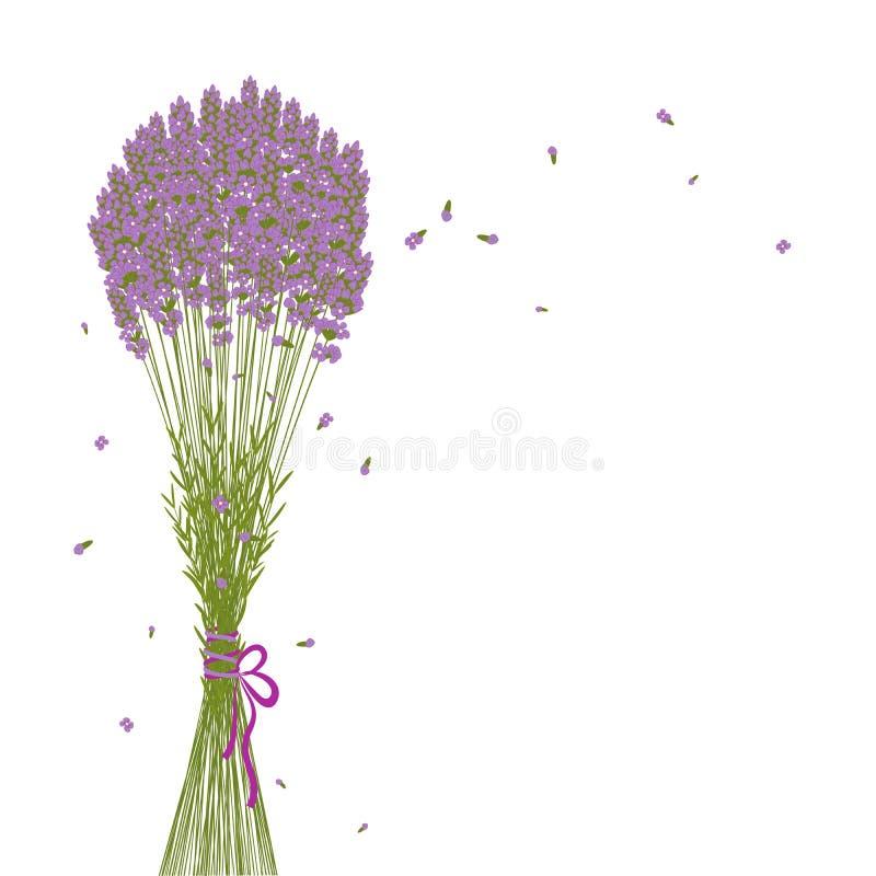 Fond pourpré de fleur de lavande illustration de vecteur