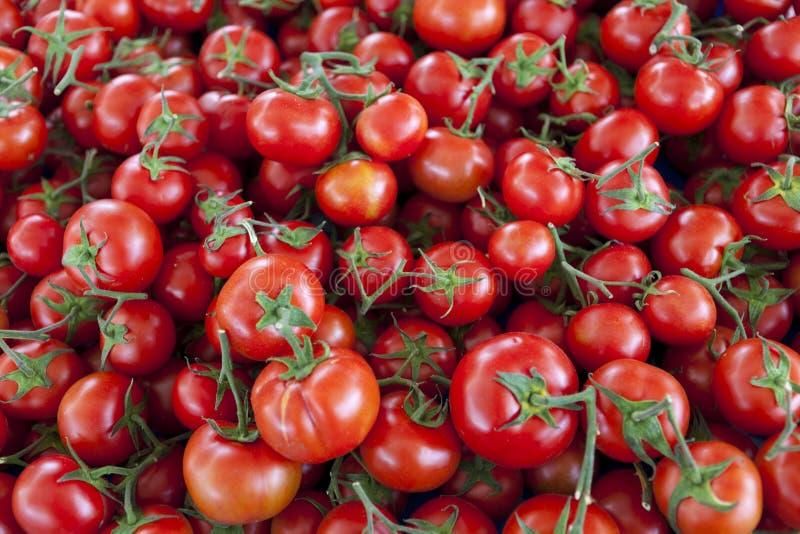 Fond qualitatif des tomates Tomates fraîches Tomates rouges Tomates organiques du marché de village photographie stock libre de droits