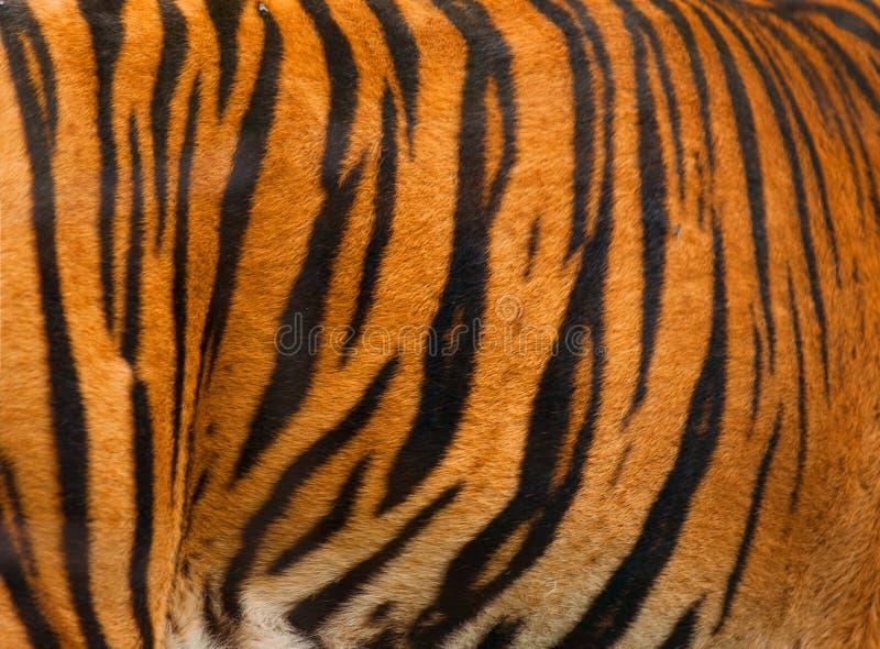 Fond réel de configuration rayée de texture de fourrure de tigre photographie stock libre de droits