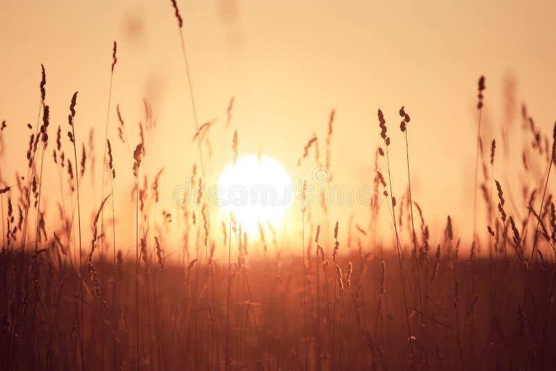 Fond rêveur d'herbe d'été au coucher du soleil photos stock