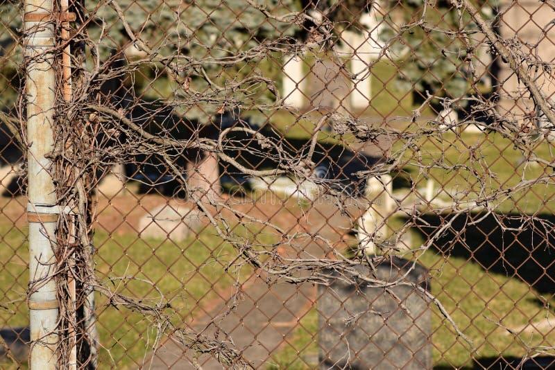 Fond rampant de texture d'abrégé sur cimetière de vigne de Brown images stock