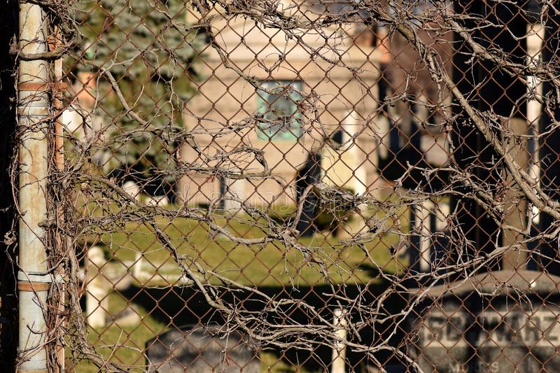 Fond rampant de texture d'abrégé sur cimetière de vigne de Brown images libres de droits