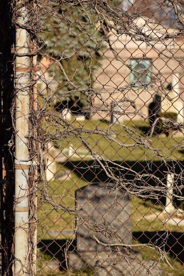 Fond rampant de texture d'abrégé sur cimetière de vigne de Brown photo stock