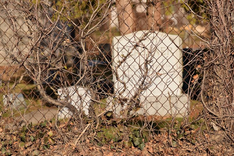 Fond rampant de texture d'abrégé sur cimetière de vigne de Brown image libre de droits