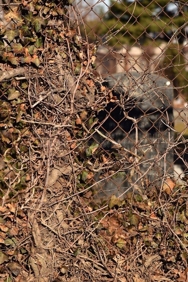 Fond rampant de texture d'abrégé sur cimetière de vigne de Brown photo libre de droits
