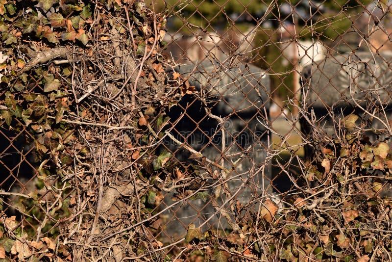Fond rampant de texture d'abrégé sur cimetière de vigne de Brown photographie stock libre de droits