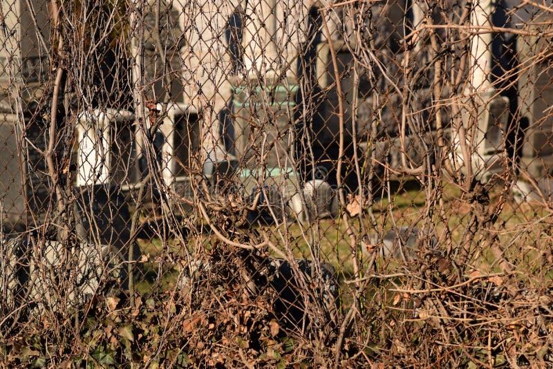 Fond rampant de texture d'abrégé sur cimetière de vigne de Brown photos libres de droits