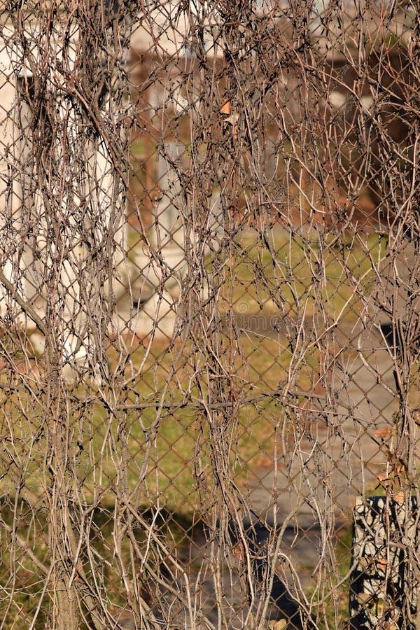 Fond rampant de texture d'abrégé sur cimetière de vigne de Brown photos stock