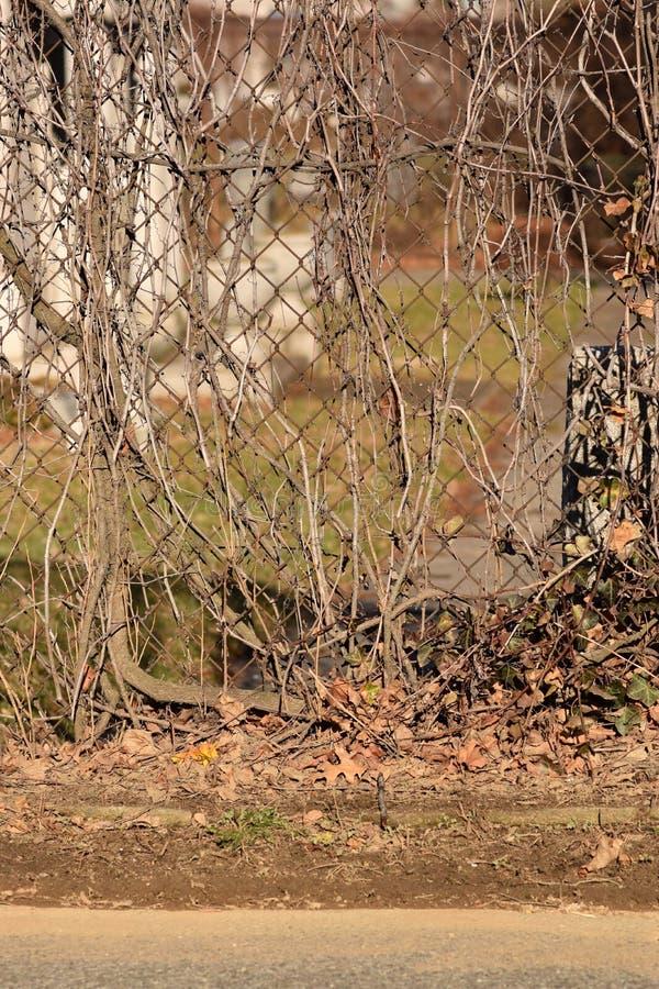 Fond rampant de texture d'abrégé sur cimetière de vigne de Brown photographie stock