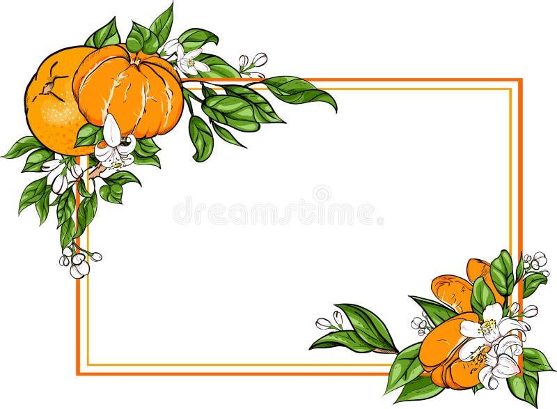 Fond rectangulaire blanc avec la mandarine illustration stock