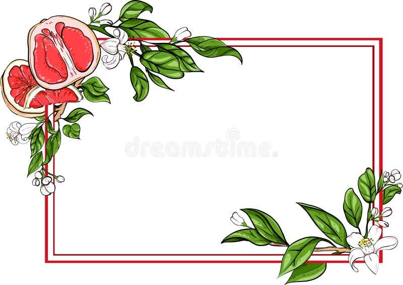 Fond rectangulaire blanc avec le pamplemousse illustration libre de droits