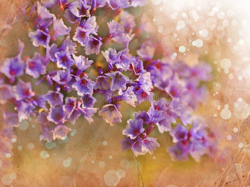 Fond romantique de ressort rose de fleurs images libres de droits