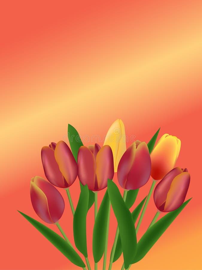 Fond rose avec les tulipes jaunes et rouges illustration libre de droits