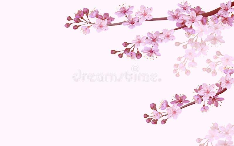Fond rose chinois réaliste de Sakura sur le fond rose mou Fond oriental de ressort de fleur de fleur de modèle 3d illustration libre de droits