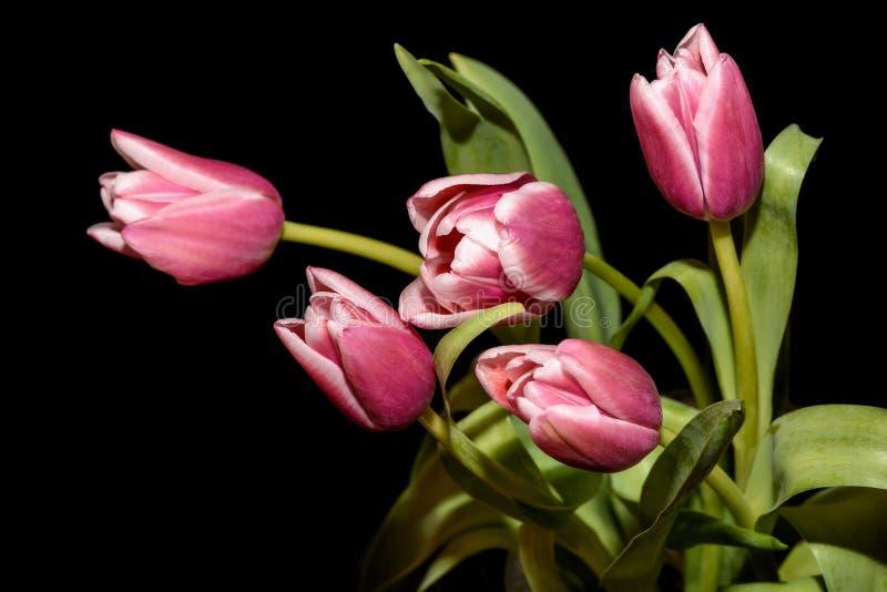 Fond rose de noir de bouquet de tulipes photographie stock