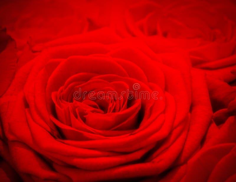 Fond rose de rouge Carte de voeux romantique d'amour images stock