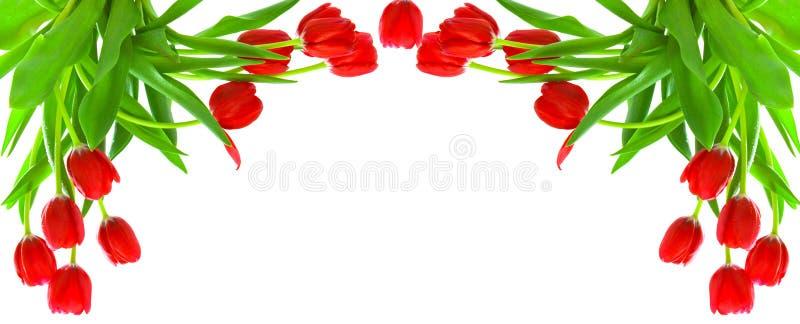 Fond rose de tulipes images libres de droits
