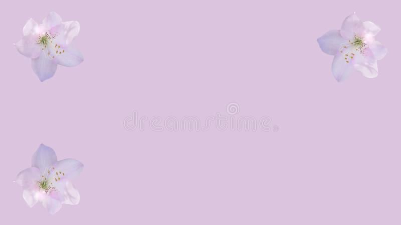 Fond rose poussiéreux encadré avec les fleurs roses d'azalée illustration stock