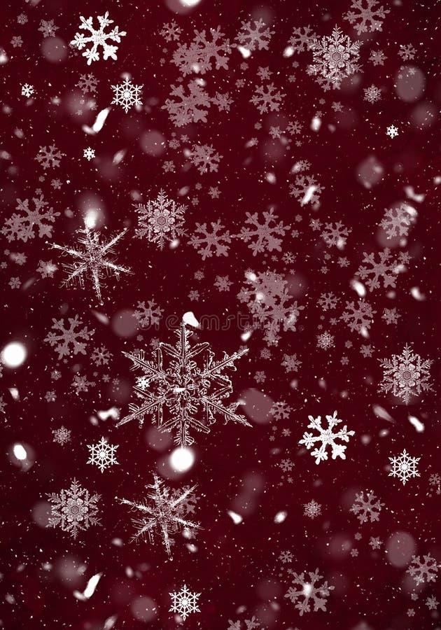 Fond rouge élégant de Noël avec des flocons de neige images stock