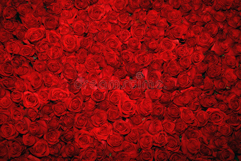 Fond rouge de roses photo stock
