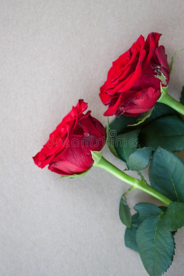 Fond rouge de roses images stock