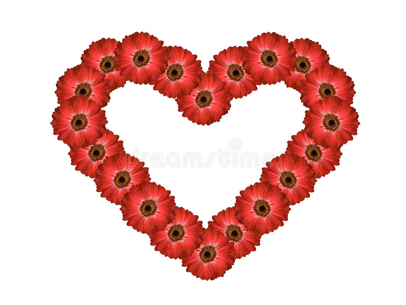 Fond rouge multiple de blanc de carte de jour de valentines de forme de coeur de fleur de marguerite de gerbera photo stock