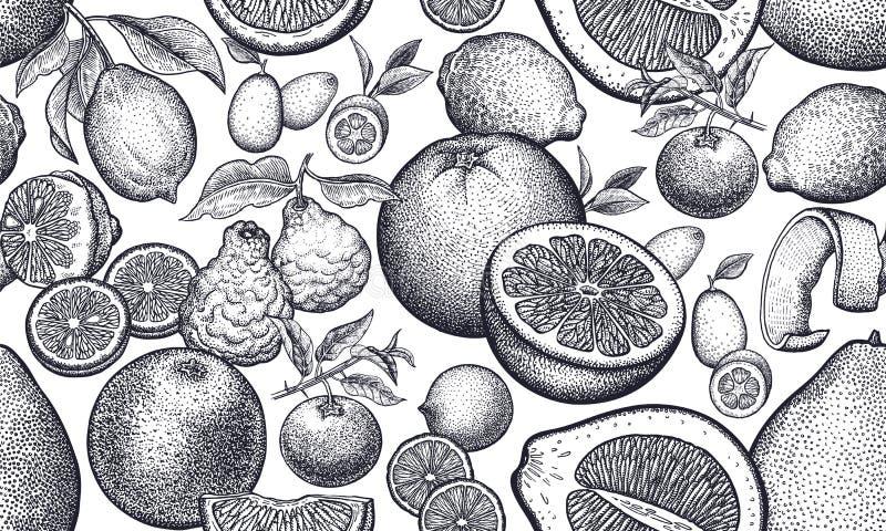 Fond sans couture avec des agrumes illustration stock
