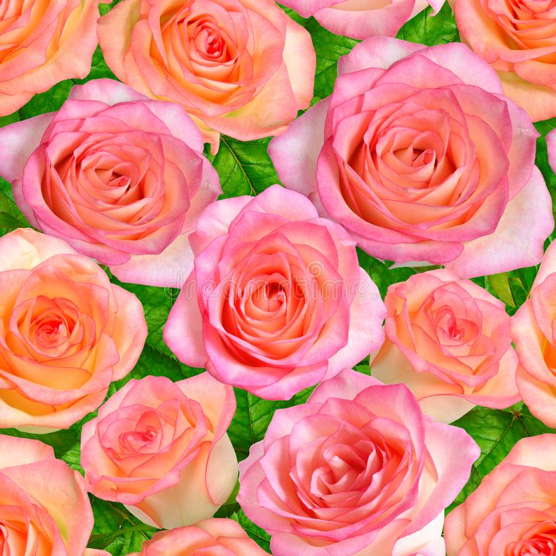 Fond sans couture avec les roses roses images libres de droits