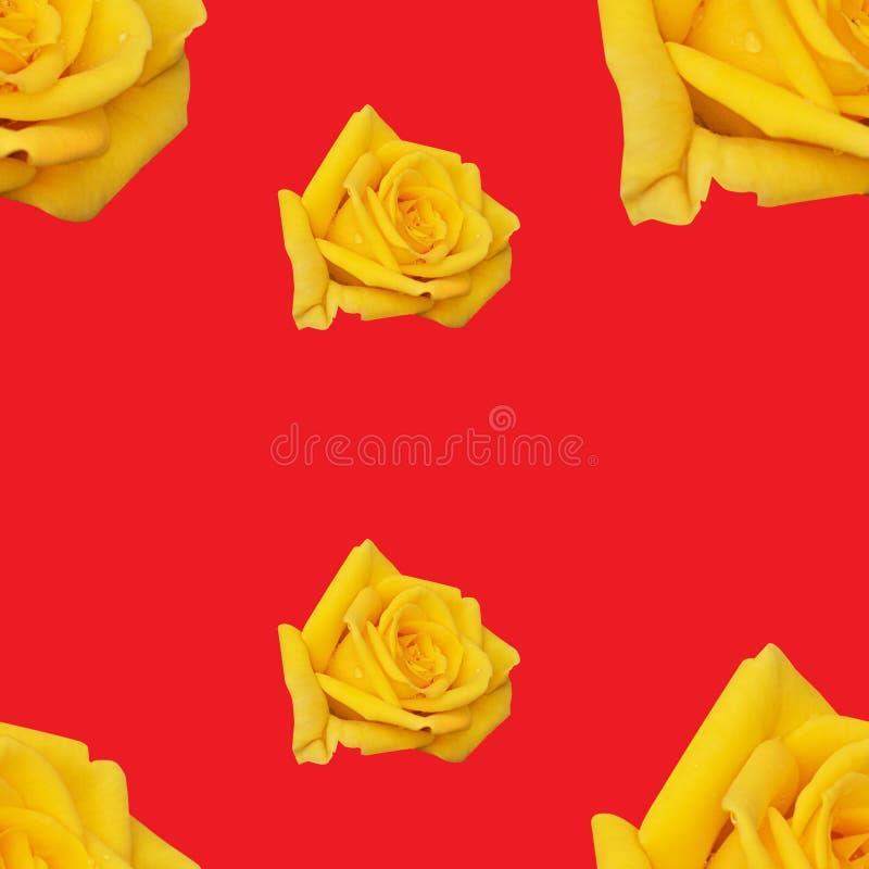 Fond sans couture avec répéter des bourgeons des roses rouges et de la couleur jaune image stock