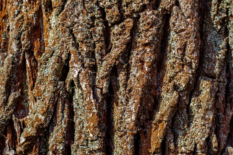 Fond sec de texture d'écorce d'arbre image stock