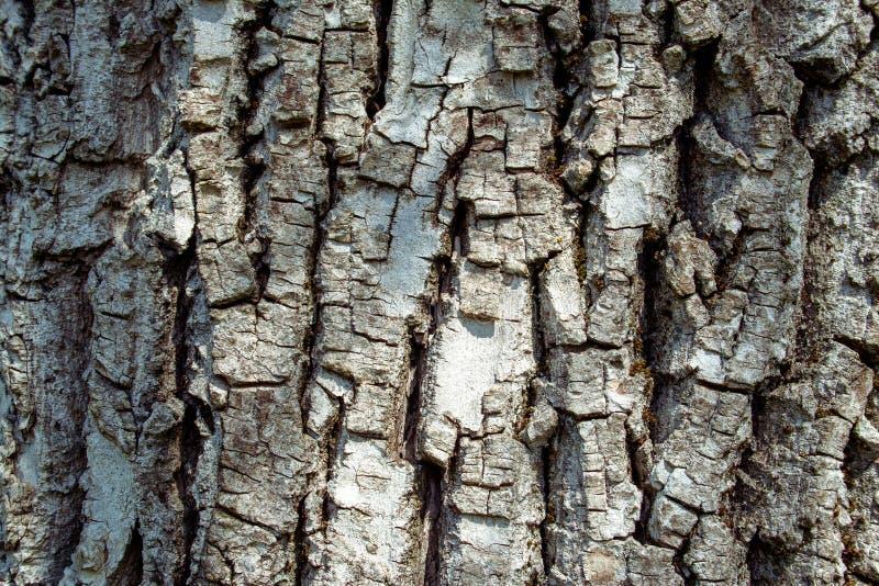Fond sec de texture d'écorce d'arbre photos stock