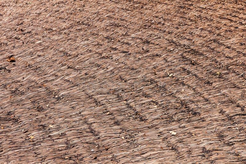 Fond sec de texture de chaume de roseaux Modèle de paille photos libres de droits